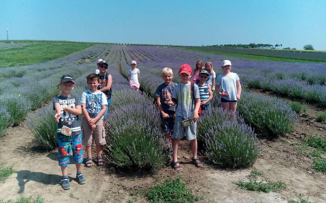 Exkurze do Levandulové farmy